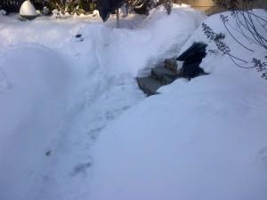 susan davis international washington dc snowzilla 2016